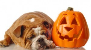 pumpkin-and-dog