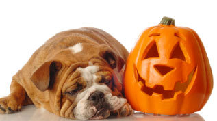 pumpkin-and-dog