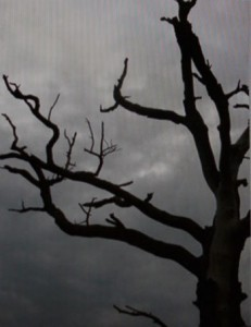 dark and stormy tree