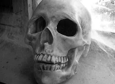 Creepy Halloween skull