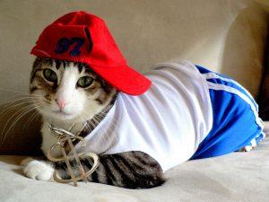 cat rapper