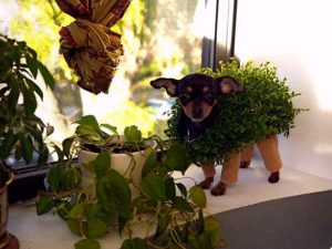 Chia pet (incrediblethings.com)