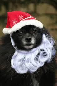 dog santa claus