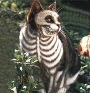 Ghost cat (boredbug.com)