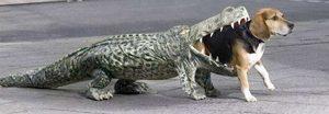 Hungry alligator (dailynewsdig.com)