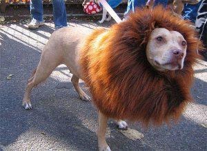Lion (trendhunter.com)