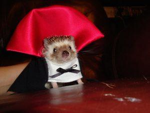Vampire ferret (earthporn.com)